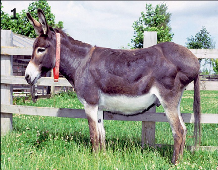 selected common conditions of donkeys vet times. Black Bedroom Furniture Sets. Home Design Ideas