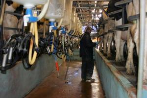 Free bulk milk test | Vet Times