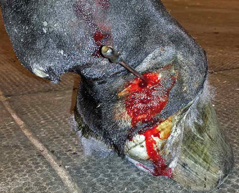 Approaches To Equine Wound Management Basic Principles