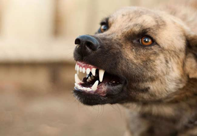 Harsher sentences for dangerous dog offences on the way