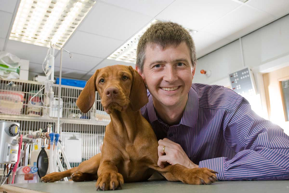 Vets Now To Open 24 Hour Referral Hospital Vet Times