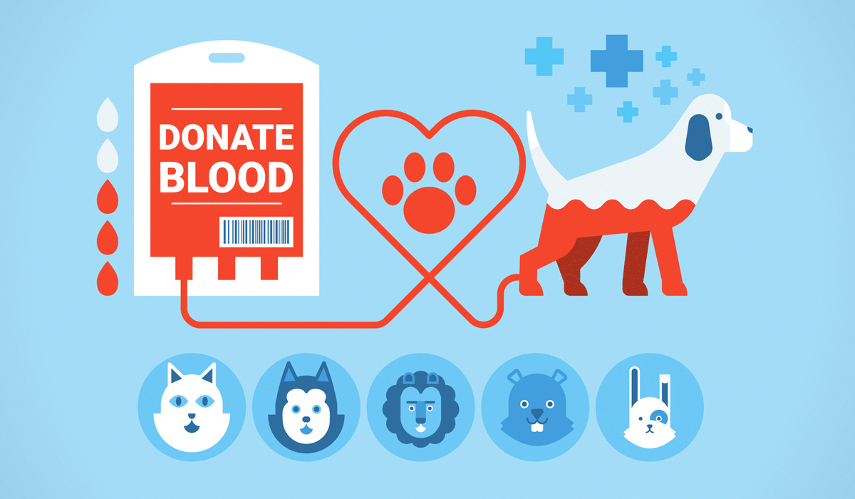Dog Blood Donor Pictures