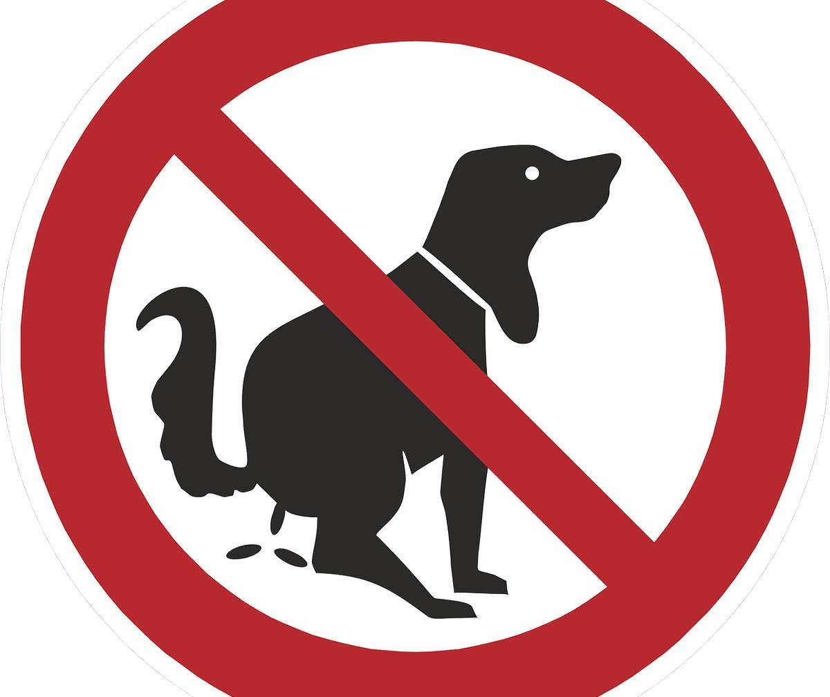 Надпись с собаками вход запрещен картинки, день покрова