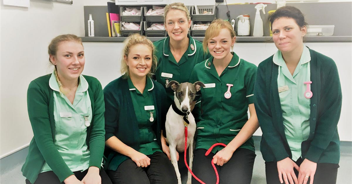 Dog on mend after \'horrific\' barbed wire wound | Vet Times