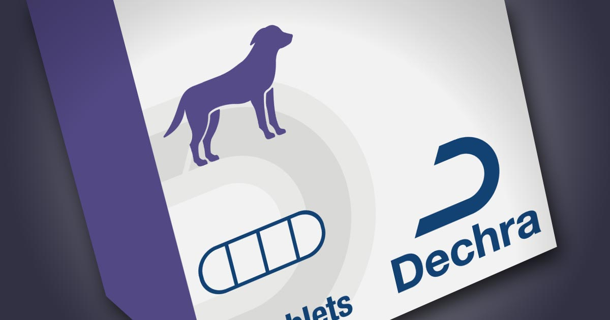 New resource for epilepsy treatment launched | Vet Times