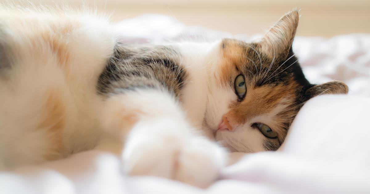 Images of heart disease symptoms in cats nose
