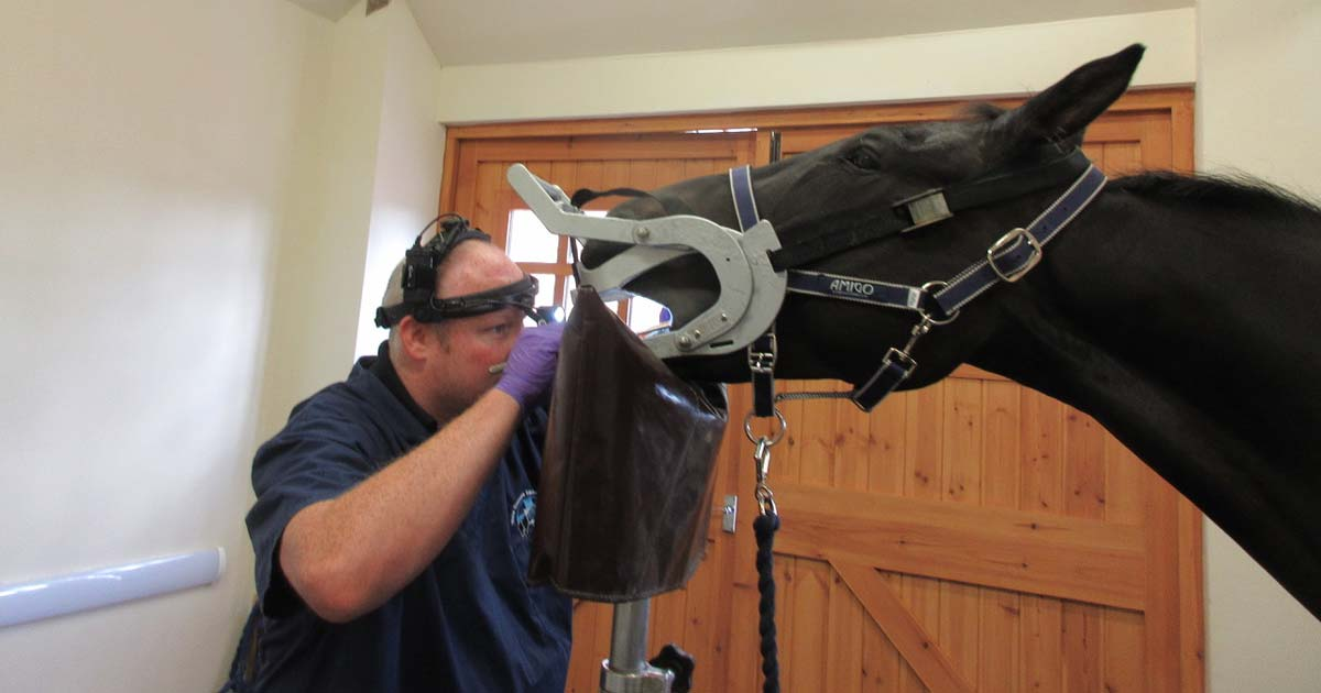 New equine dental resources released | Vet Times